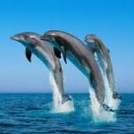 BDT wildlife dolphin