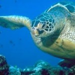 BDT wildlife turtle