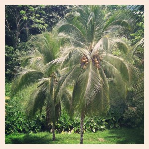 Palm Trees at Red Frog Beach