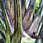 "Scary ""Dinosaur Jaw"" like plant"