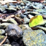 Leaf cutter ants at Red Frog Beach nature hike